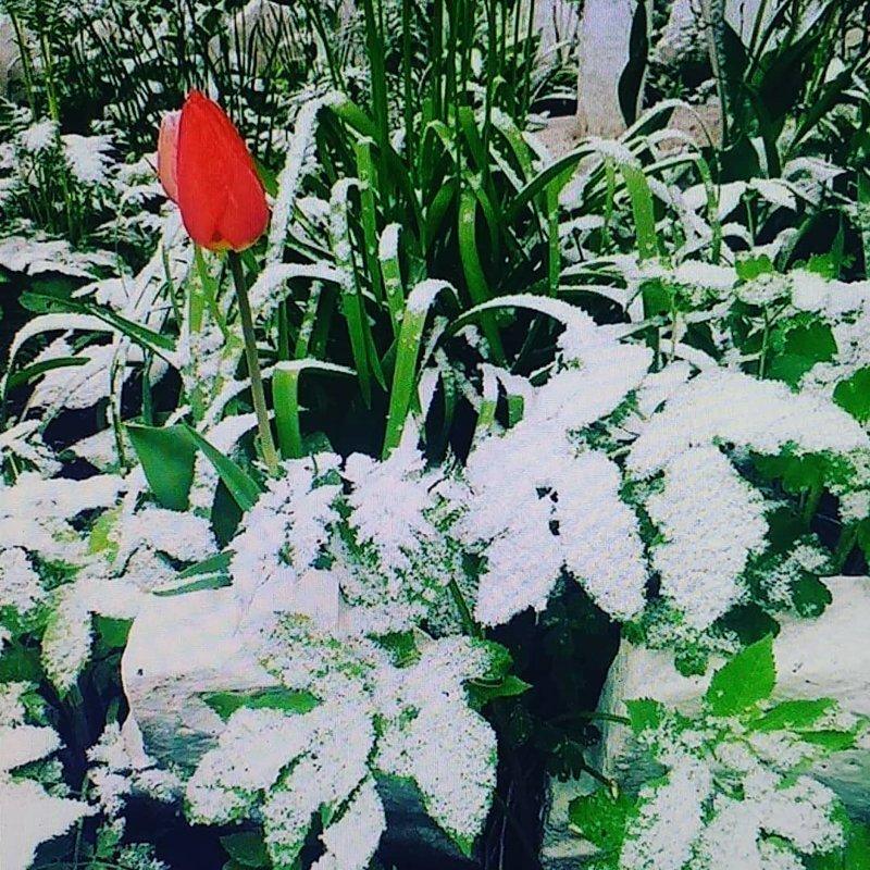 """""""Снегу-роч-ка!"""": пользователи сети делятся фотографиями первого дня лета Лето-2018, каникулы, соцсети, температура, фото, холодно"""