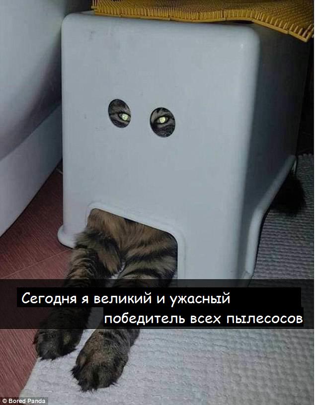 Из жизни котов без кота и жизнь не та, коты, кошки