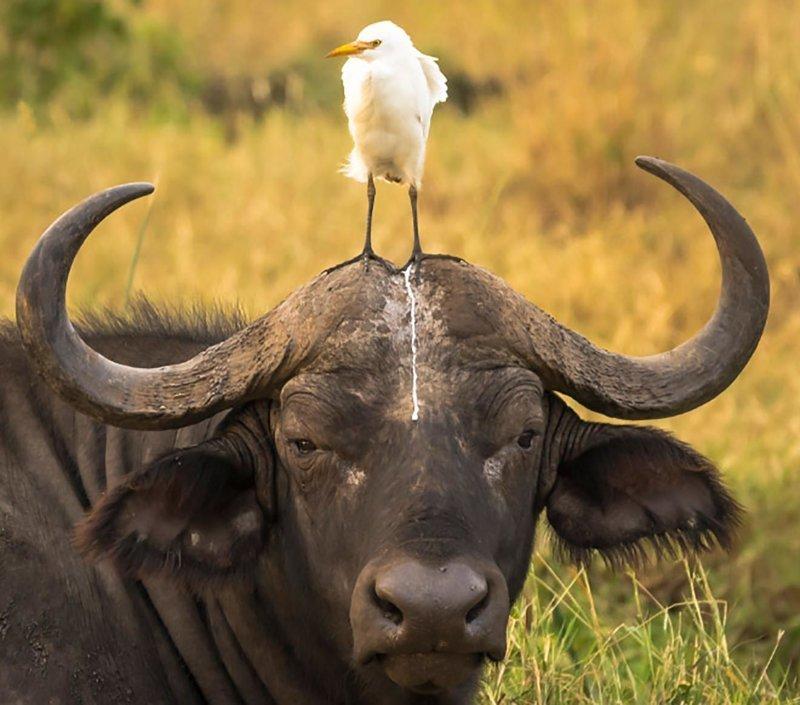 Весёлые фотографии с забавными животными, которые любят, чтобы их катали верхом в мире, вверхом, животные, милота, природа