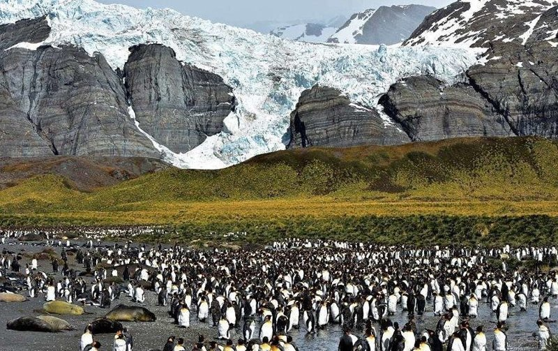 Экс-полицейский отправился на службу в Антарктику - и не захотел возвращаться Антарктика, Южная Георгия, измени жизнь, интересно, меняем профессию, полицейский, полярная жизнь, тяжелая работа