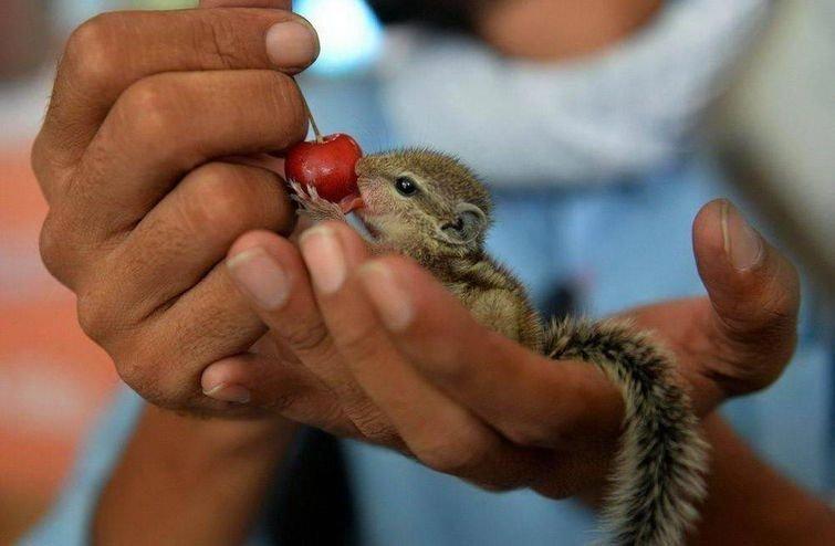 ... и покушать.. в мире, добро, животные, красота, люди, позитив, природа, фото