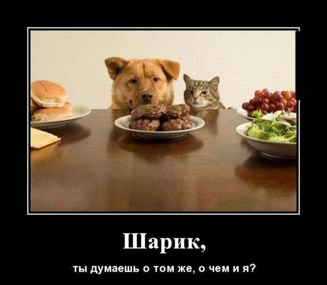 Демотиваторы демотиваторы, коты, юмор