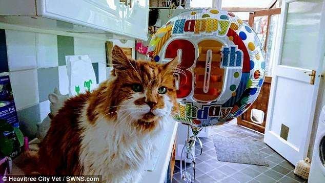 Котик - в пересчете на человеческий возраст ему примерно 137 лет - очень неплохо сохранился! 30 лет, великобритания, долгожитель, кот, котяра, рыжий кот, самый, старый