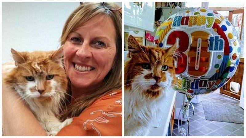 Коту-долгожителю Рабблу исполнилось 30 лет 30 лет, великобритания, долгожитель, кот, котяра, рыжий кот, самый, старый