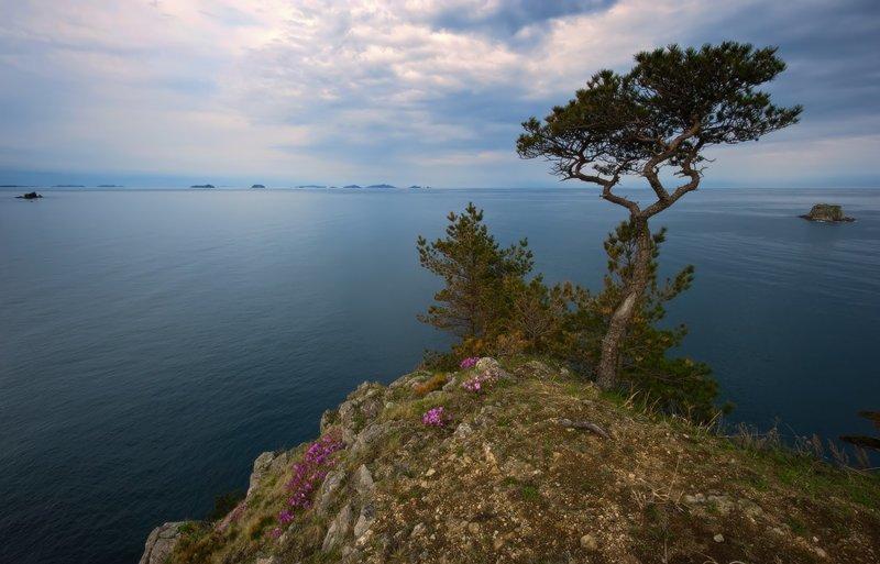 Мыс Теляковского (Дальневосточный Морской заповедник, Японское море) Майские картинки, природа, фото