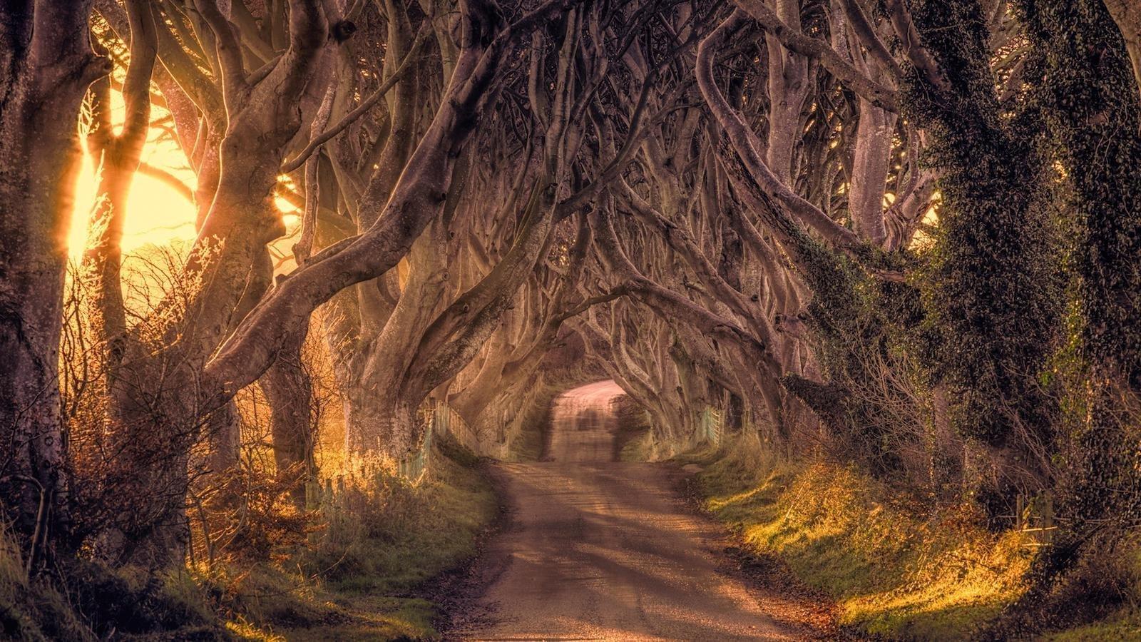 Буковая аллея, Северная Ирландия красивые места, мир, природа, путешествия, сказка
