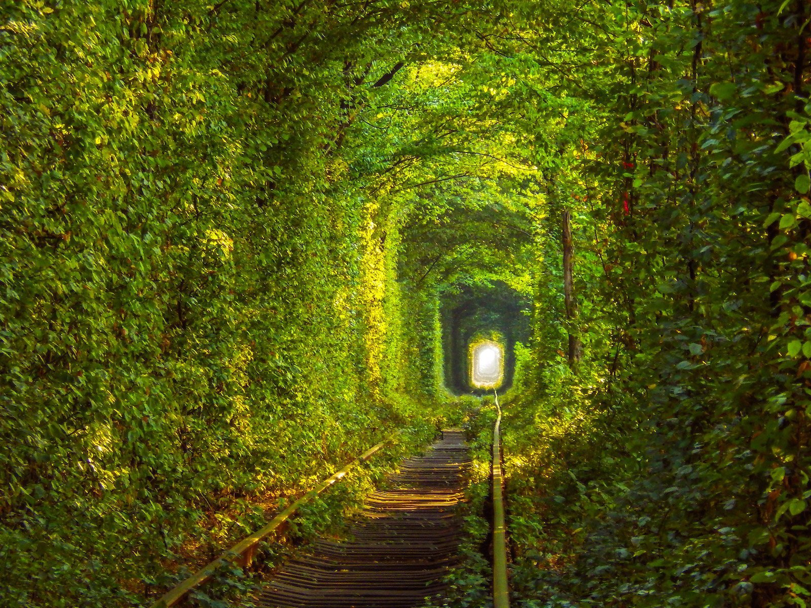 Тоннель любви, Клевань, Украина красивые места, мир, природа, путешествия, сказка