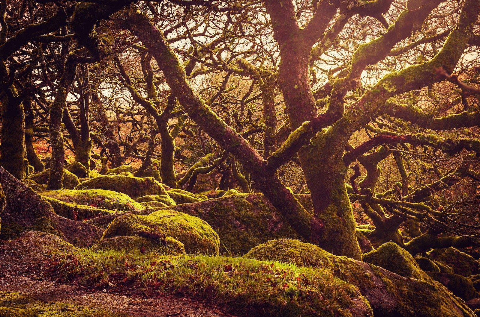 Вистманский лес, Англия красивые места, мир, природа, путешествия, сказка