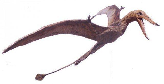 Несмотря на устрашающие зубы, наш птерозавр был весьма скромных размером - тело чуть больше чем у вороны, а размах крыльев примерно как у чайки таких же размеров. животные, интересно, окаменелости, палеонтология