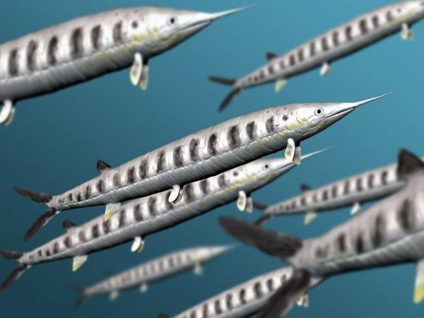 Хищная рыба аспидоринх (Aspidorhynchus) - реконструкция внешнего вида соперника рамфоринха. животные, интересно, окаменелости, палеонтология