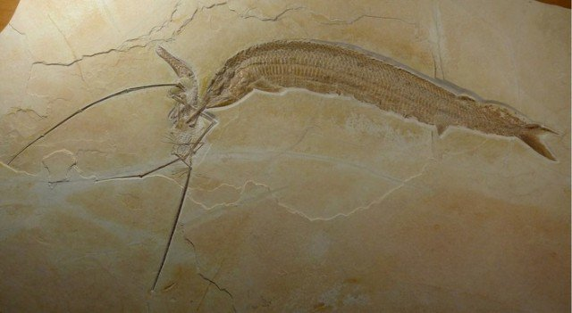 Застывший образ - через полторы сотни миллионов лет... животные, интересно, окаменелости, палеонтология
