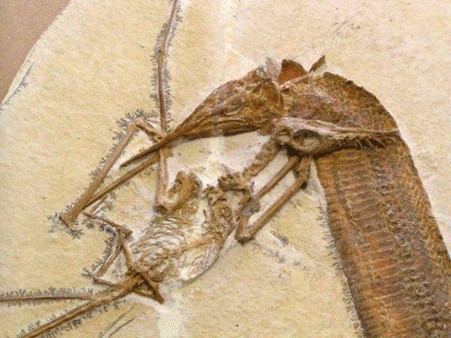 Крупный план  животные, интересно, окаменелости, палеонтология