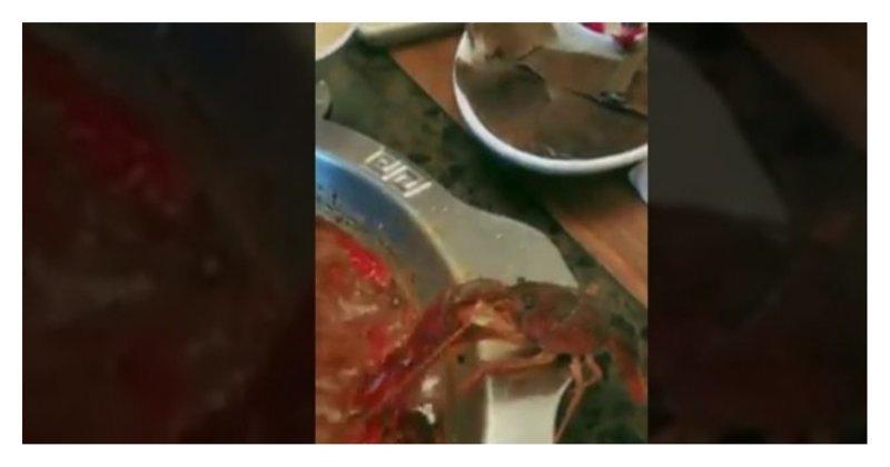 Раку удалось спастись из кастрюли с кипятком ценой собственной клешни: видео Jiuke (九可), weibo, ynews, еда, китай, рак, ресторан