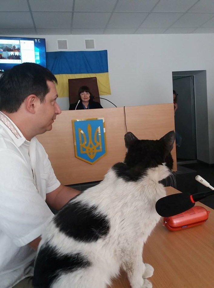 В Шевченковском райсуде Запорожья судили кота Ваську за кражу колбасы Запорожье, кот, правосудие, суд