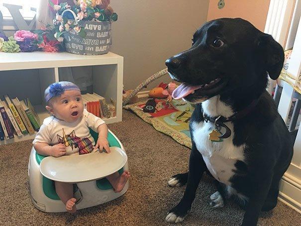 10. Собака встреча, мечта, первый раз, путешествие, реакция, событие, эмоции