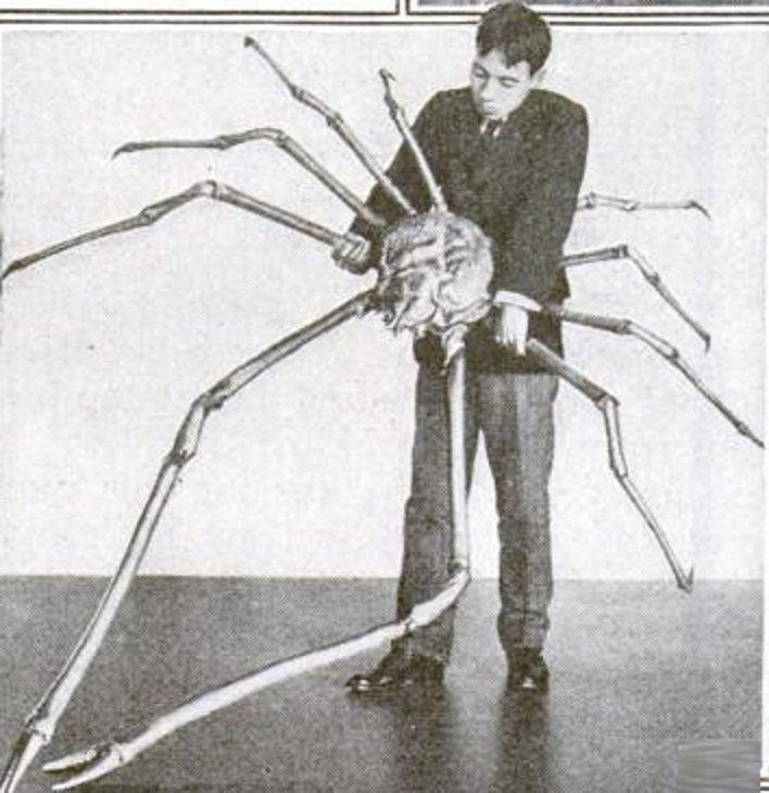 И если вы думаете, что гиганты вымерли и вас уже ничем не удивить, то...    Знакомьтесь японский краб-паук: интересно, наука, окаменелости, палеонтология