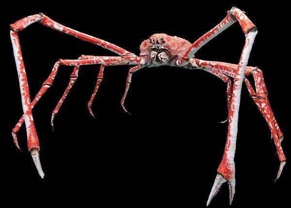 Данный экземпляр хранится в американском музее естественной истории. Размер по ногам - 3.8 метра! интересно, наука, окаменелости, палеонтология