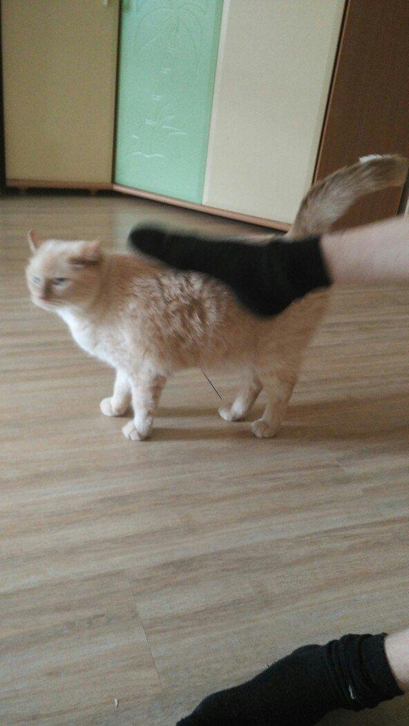 Надевать носки и погладить ногой проходящего мимо кота - чем не историческое фото? бесполезные фото, всячина, интересное, мусор, юмор