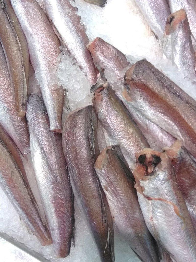 Рыба на прилавке. А может человек первый раз был в рыбном магазине, вот и запечатлел на память? бесполезные фото, всячина, интересное, мусор, юмор