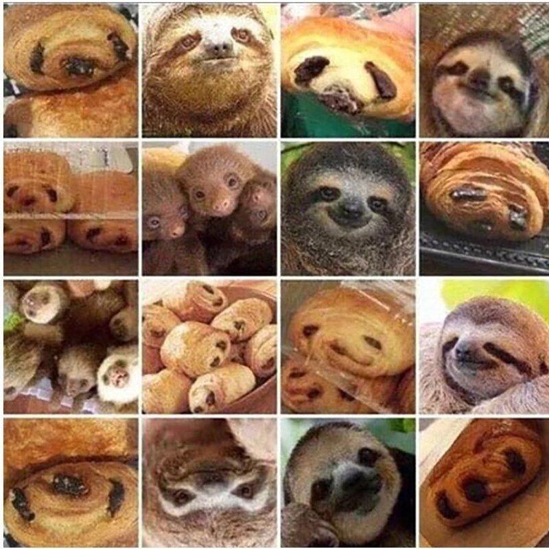 Булочка или ленивец? интересное, карикатуры, талантливо, хлеб, юмор. смешное