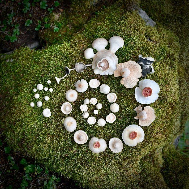 Шедевры природы: Финка создаёт картины из диких грибов грибы, картина, красота, креатив, природа, фантазия