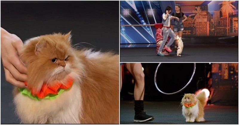 Дрессировщицы кошек покорили зрителей и жюри шоу талантов America's Got Talent, видео, животные, кошки, шоу талантов