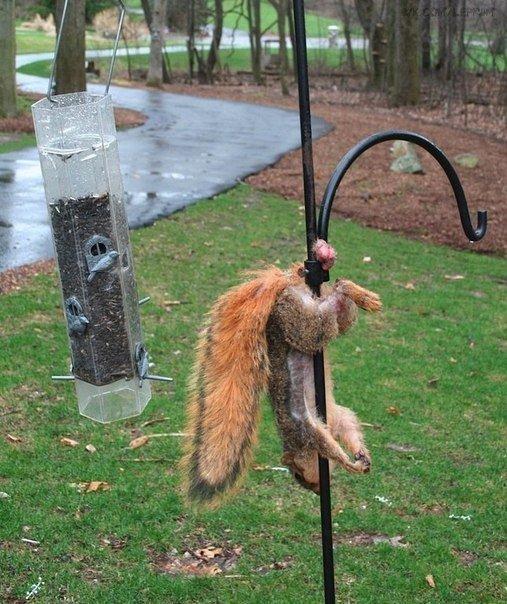 Не толкьо люди попадают в неудачные ситуации, но и животные тоже! застрял, интересное, ля-ля-ля, неудобно, прикол, фото, юмор
