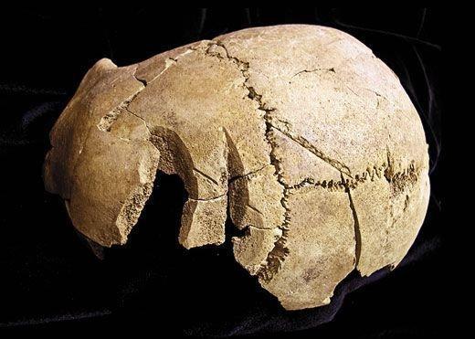 Череп с рубленными ранами  интересно, история, мумии, наука, скелеты