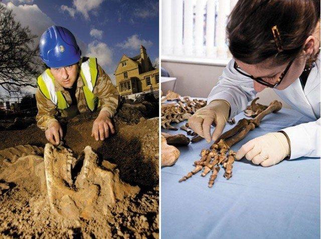 Археологи за работой  интересно, история, мумии, наука, скелеты