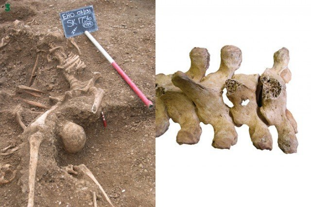 "Скелеты на помойке, сериал ""Викинги"", блютуз и многое другое... Мумии и скелеты интересно, история, мумии, наука, скелеты"