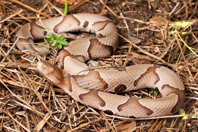 Все люди делятся на тех, кто видит на этом фото змею и тех, кто — нет змея, иллюзия, обман, прикол, угадайка