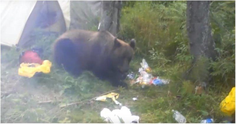 Наглый медведь съел продукты отправившегося в поход сибиряка видео, еда, животные, медведь, прикол, продукты, турист