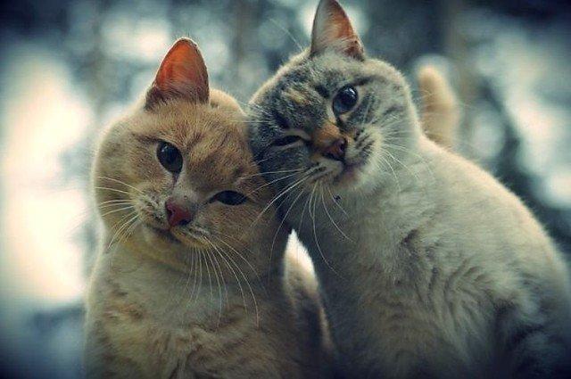 Подборочка позитивных фото животные., жизнь, люди, фото