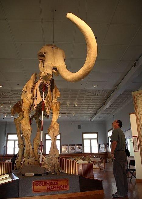 Он же рядом с человеком, высота в холке около 4 метр интересно, наука, палеонтология