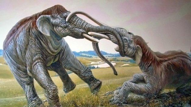 Мамонты - дуэлянты, койот - неудачник интересно, наука, палеонтология