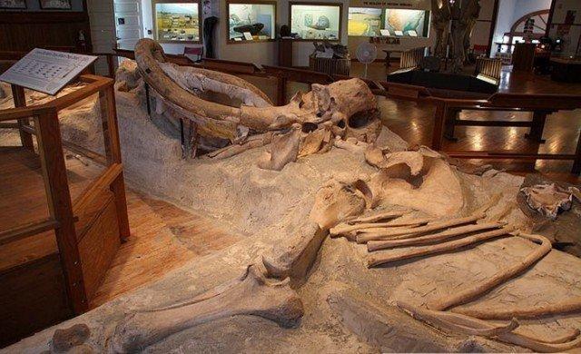 Общий вид интересно, наука, палеонтология