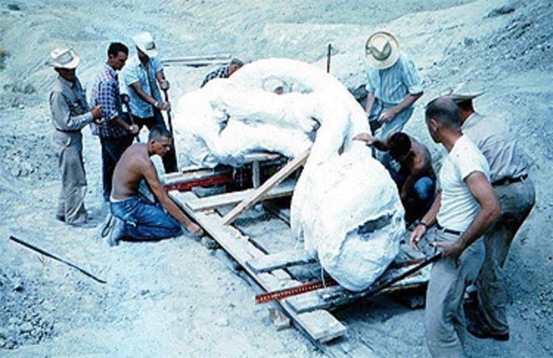 Подготовка к транспортировке уникальной находки  интересно, наука, палеонтология