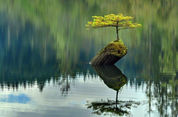 А это просто прекрасно в мире, деревья, красота, природа, фото