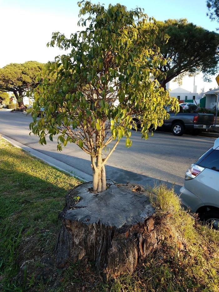 Дерево в дереве (в перспективе — в дереве в дереве в дереве) в мире, деревья, красота, природа, фото