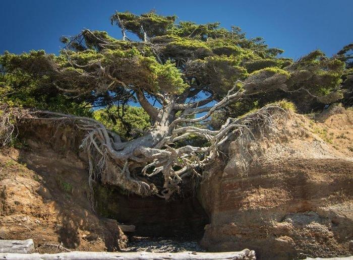 """""""Нет, я не упаду!"""" в мире, деревья, красота, природа, фото"""