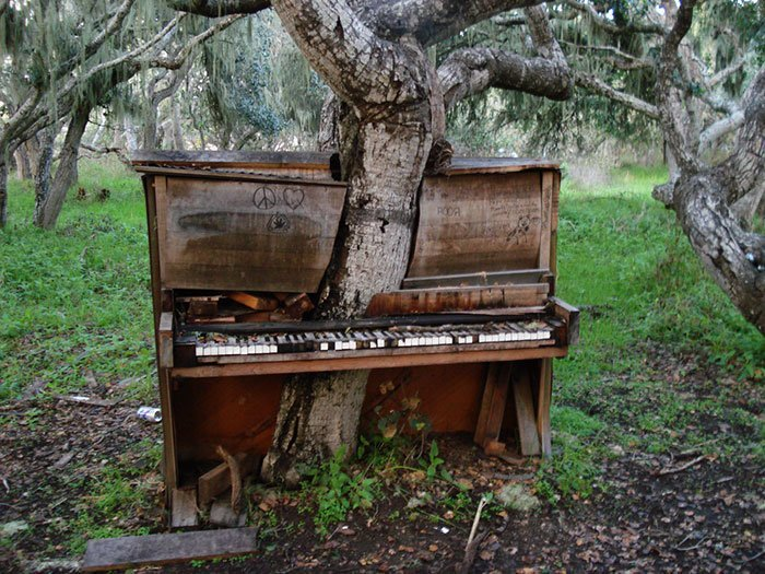 Музыкальное дерево. Или деревянное пианино? в мире, деревья, красота, природа, фото