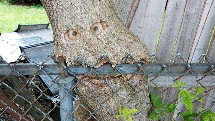 В общем, некоторым деревьям палец в рот не клади! И даже забор железный — и тот класть мы бы не посоветовали в мире, деревья, красота, природа, фото