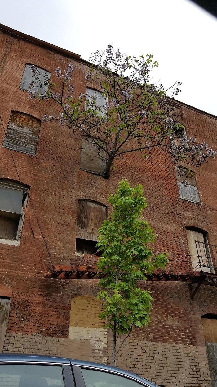 В жизни всегда есть выход, пусть даже на третьем этаже в мире, деревья, красота, природа, фото