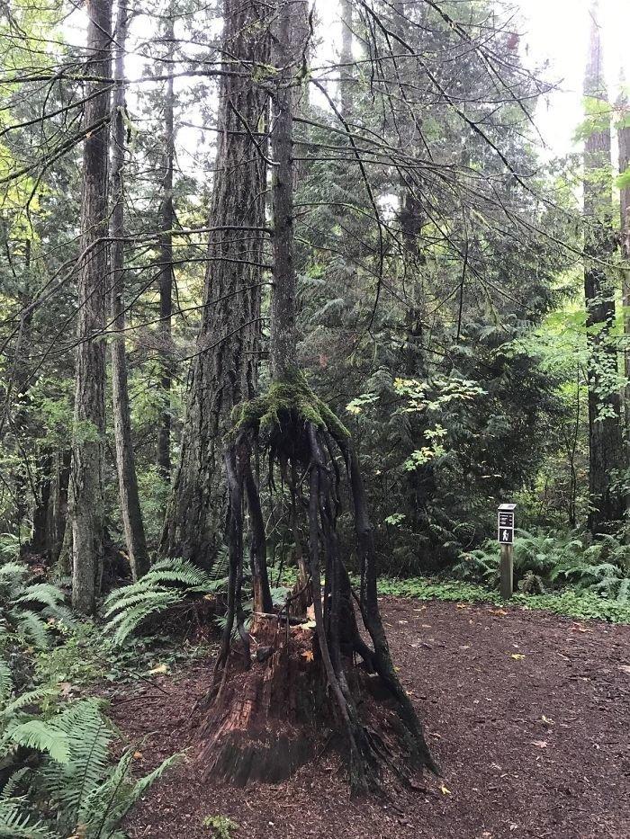 Вот как примерно здесь в мире, деревья, красота, природа, фото