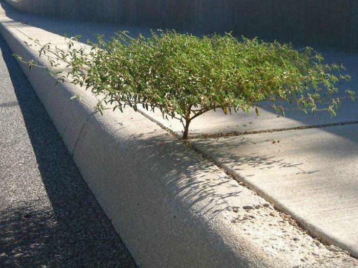 Бетонные плиты? Какие бетонные плиты?! в мире, деревья, красота, природа, фото