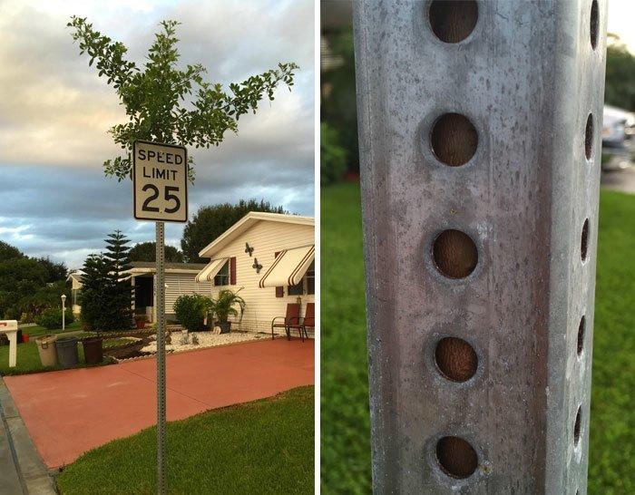 Если дерево растет сквозь знак — тем хуже для знака в мире, деревья, красота, природа, фото