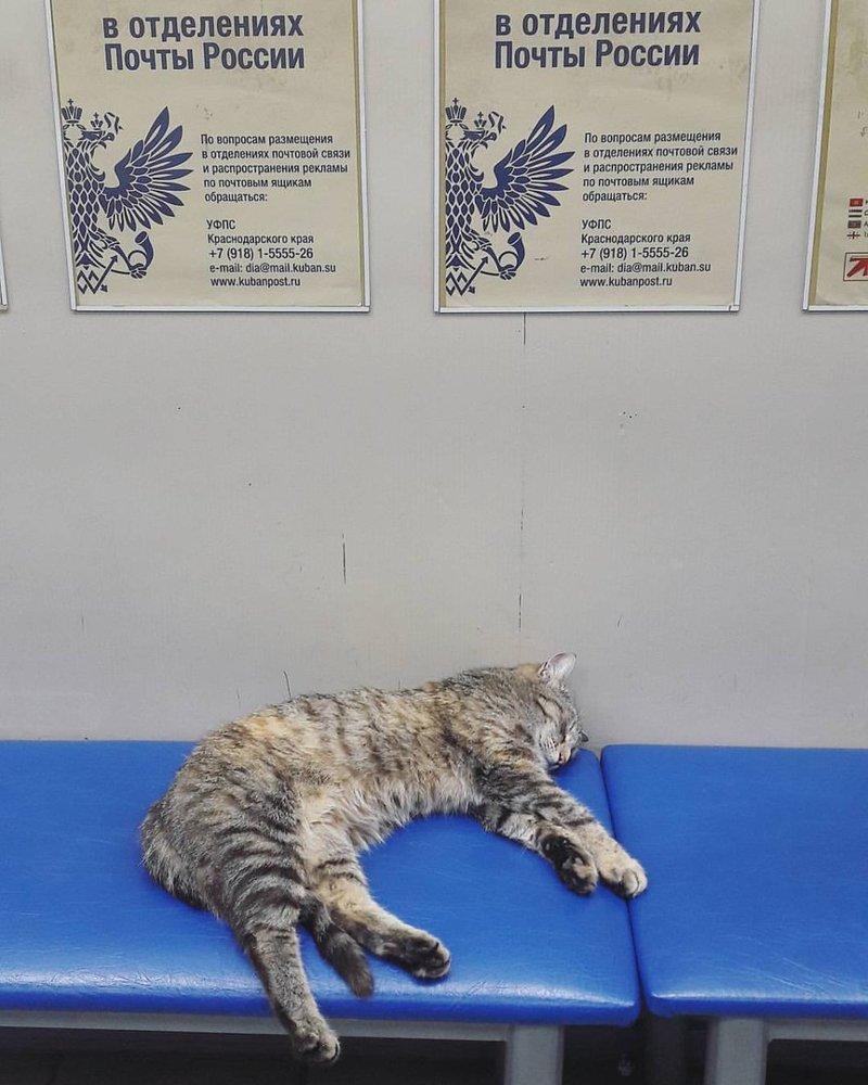 #Почтокот в мире, животные, кошка, милота, омск, почта, флешмоб