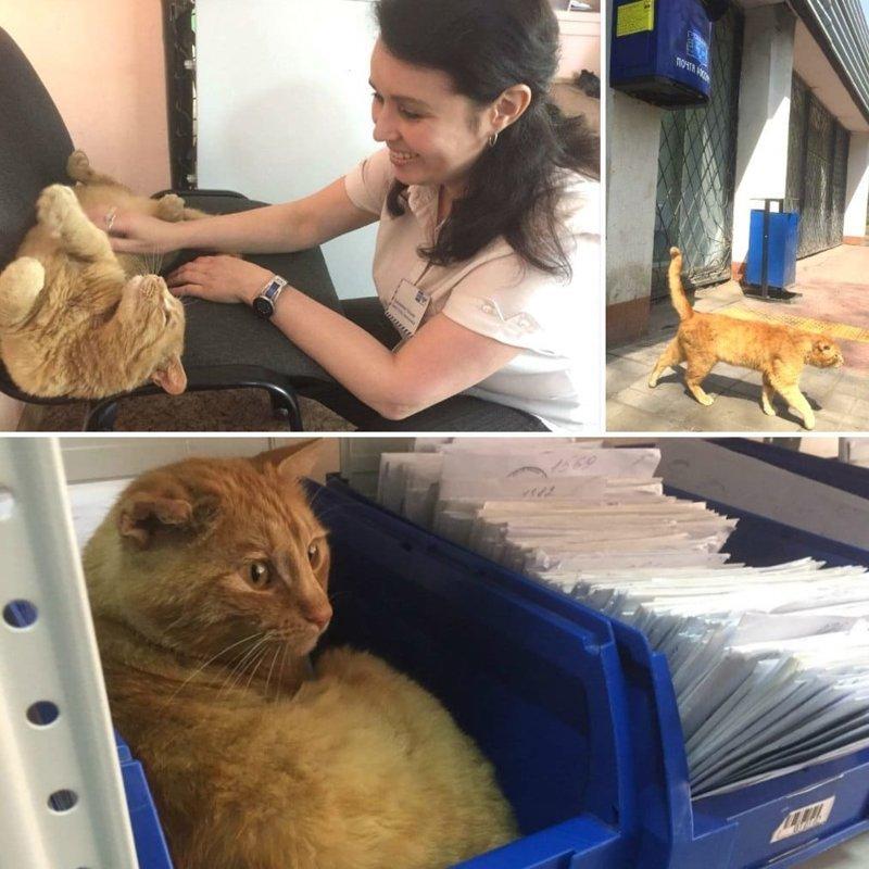 Кот произвёл на всех такое впечатление, что пост о нём даже опубликовали на официальной странице «Почты России» в мире, животные, кошка, милота, омск, почта, флешмоб