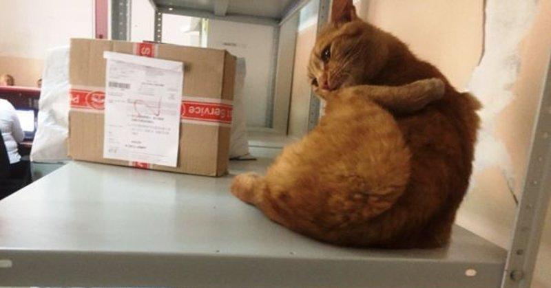 В отделениях «Почты России» начался кошачий флешмоб. А всё из-за одного необычного работника из Омска в мире, животные, кошка, милота, омск, почта, флешмоб