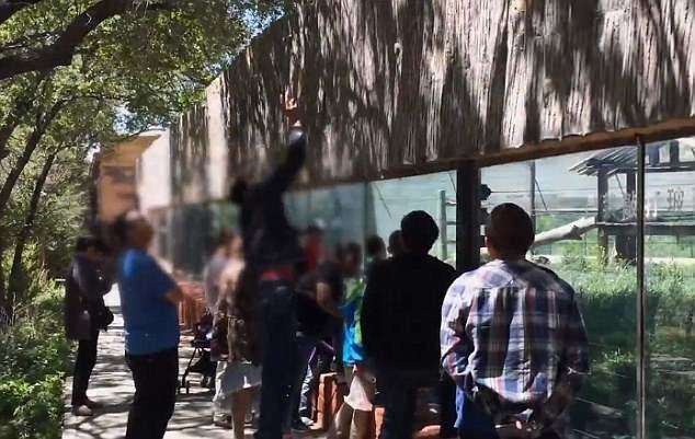 У вольера с Джиаку всегда толпятся люди зоопарк, и такое бывает, китай, курение, обезьяна, сигареты, шимпанзе, шимпанзе как люди